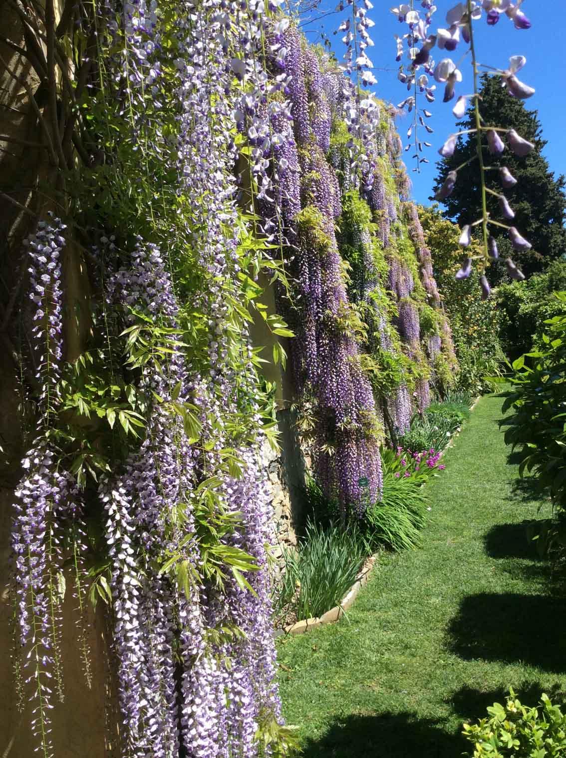 VILLA DELLA PERGOLA (Alassio, Savona) Italian garden